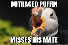 Puffin Meme - unpopular opinion puffins are now permanently banned adviceanimals