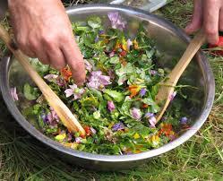 luttre le samedi 28 02 atelier cuisine plantes sauvages