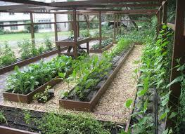 garden design vegetable dutapetanimuda org