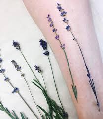 lavendar collections