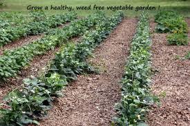 tips on how to grow a vegetable garden dengarden