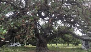 see the hill country through a chion big tree tour