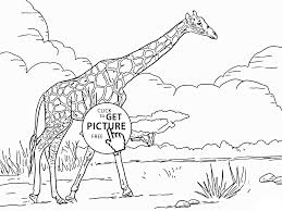 giraffe animal coloring page for kids animal coloring pages