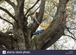 couple in old red oak tree stock photo royalty free image