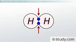chemical bonds iii polar covalent video u0026 lesson transcript