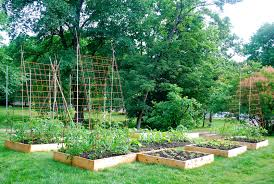 seeding the good life building tomato trellises from rebar and remesh