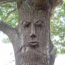 genuine tree peeple simon tree face 108 gtp hd the home depot