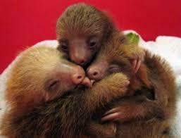 sloth hug jpg