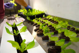 an intro to hydroponics 9 benefits of growing without soil