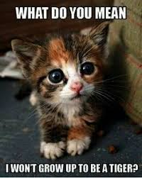 Kitty Meme Generator - i admit i love kitties more than puppies i wish my landlord could