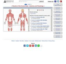 Anatomy And Physiology The Muscular System Muscular System Tutorials U0026 Quizzes On Skeletal Muscle Anatomy