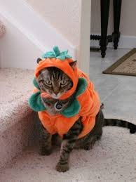 Cat Halloween Costumes Cats 13 Dogtober Monster Mash Images Dog Halloween
