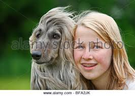 afghan hound look alike breeds afghan hound dog canis lupus familiaris male running on a race