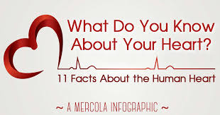 11 fascinating facts about the human infographic