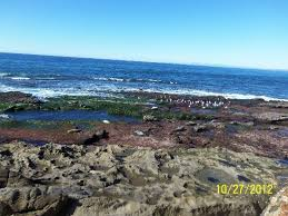 tide table myrtle beach shell beach tide pools la jolla 2018 all you need to know before