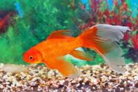 pesci alimentazione alimentazione dei pesci cose per crescere