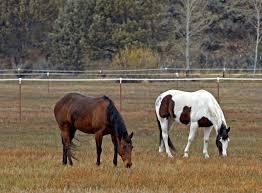 Sale Barns In Nebraska Dealing With Unwanted Horses In Nebraska Nebraska Extension