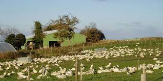 chambre d agriculture 02 trois cas d influenza aviaire faiblement pathogène détectés dans le