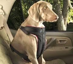 porta cani per auto norme europee trasporto in auto lettera43 it