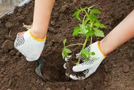 gardening tips gardening