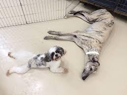 Blue Dog Boarding And Daycare Kensington Bethesda Md Dc