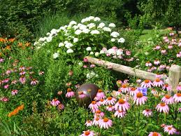 native arkansas plants benefit garden tour hosted by flower garden and nature society of