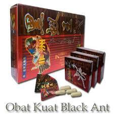 black ant afrika obat kuat herbal semut hitam rahasia pria