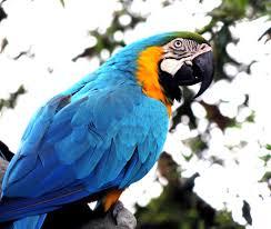 parrot photos pexels free stock photos