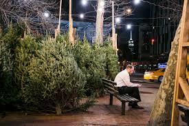 tree shop in new york rainforest islands ferry