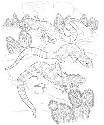 desert lizard coloring page sun over desert cactuses coloring page free printable plants pages