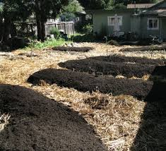 60 best sheet mulching lassagna gardening hugelkultur images on