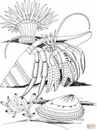 ages sea animals printable free sea crab coloring pages animals