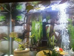 types of aquarium what types of plants are best with goldfish 174447