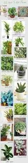 330 best gardens in the house images on pinterest indoor plants