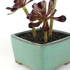bonsai box square succulent bonsai diy kit juicykits com bonsai box