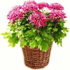 indoor plants images indoor air purifying plants top 10 air purifying plants to have