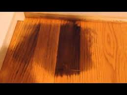 How To Clean Oak Wood by Remove Pet Urine On Hardwood Floor Youtube