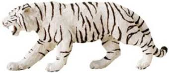 white tiger siberian tiger at