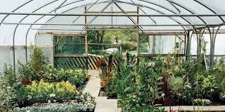 native plant wholesalers 18 best miami garden and nursery stores expertise