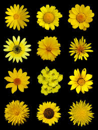 List Of Flowers by Yellow Flowers Images Qygjxz