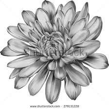 Birth Flowers By Month - best 25 birth flower tattoos ideas on pinterest birth flowers
