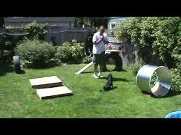 Backyard Agility Course Rat Terrier Cross Backyard Obstacle Course Youtube