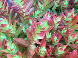 poyntons nursery and garden centre plants succulents and cacti