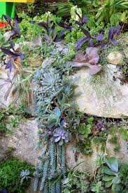 rock oak deer succulents on the rocks for a lush vertical garden