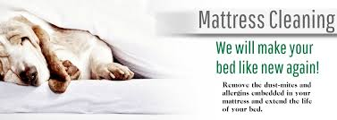 Upholstery Shampoo For Mattress Upholstery Cleaning All Natural Chemical Free Process All