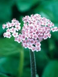 Flowers Plants by 11 Striking Bog Plants Hgtv