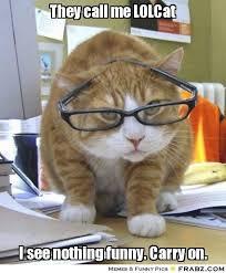 Lol Cat Meme - cat meme