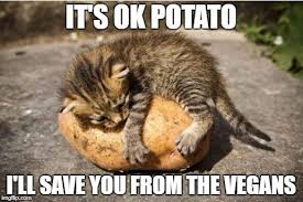 Cat Hug Meme - meme maker cat hug maker best of the funny meme