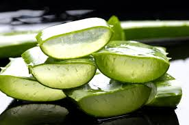 100 aloe vera facts 15 amazing benefits for drinking aloe