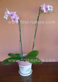 caring for orchids as house plants